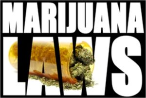 Cannabis Business Lawyers NJ